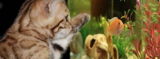 Hvilke problemer kan oppstå i et akvarium?