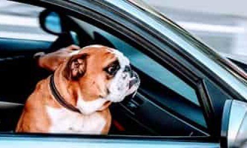 Hundebur – Tips og kjøpeguide