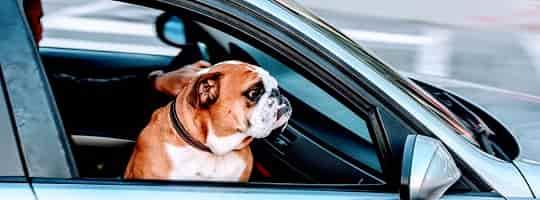 Hundebur - Tips og kjøpeguide