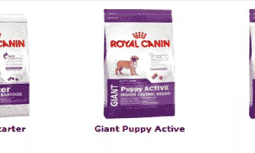 Hundefor – Tips og kjøpeguide