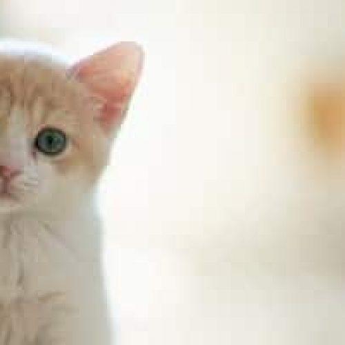 Kattestell – Tips og gode råd