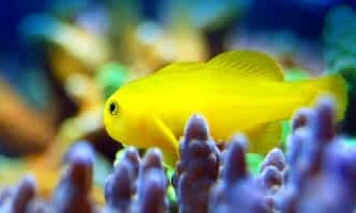 Vedlikehold av akvarium – Tips og gode råd